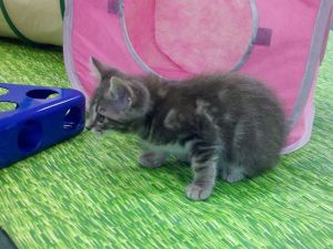 Kitten Basics